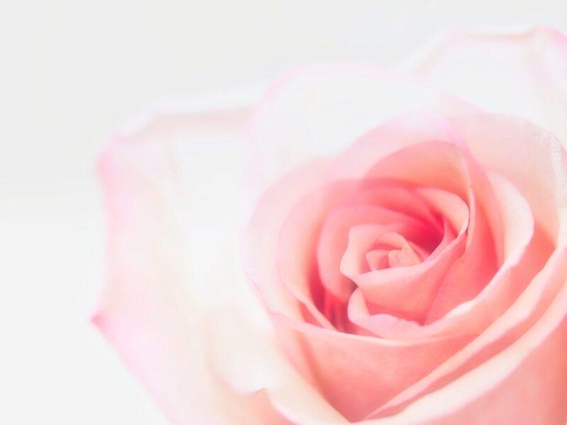 laser en dermatologia flor